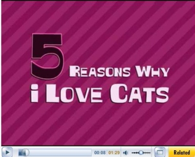 5 reasons why I love cats